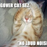 hangovercat