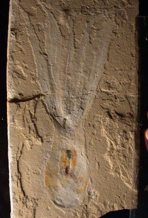 cthulhu-fossil