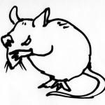 pruning rat