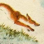 fox-thum