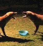 fox17thumb