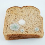 bread_mold