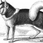 esquidog