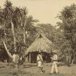 palm hut 1885