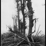trees france 1918