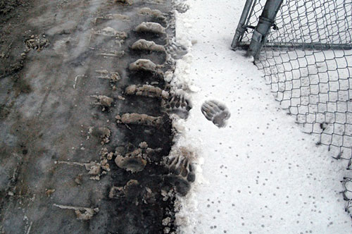 boots_tracks