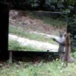 leopard_sm