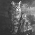 1920s cat