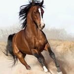 horse_ebooks_sm