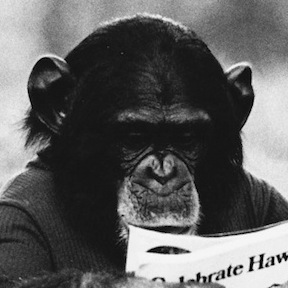 nim chimpsky thumb