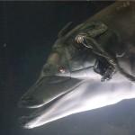 dolphin-in-johnny-mnemonic