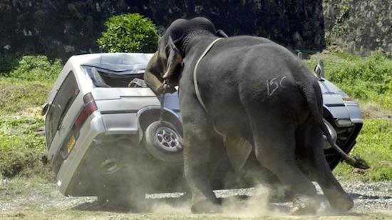 elephant-suv