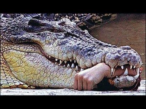 gator-hand