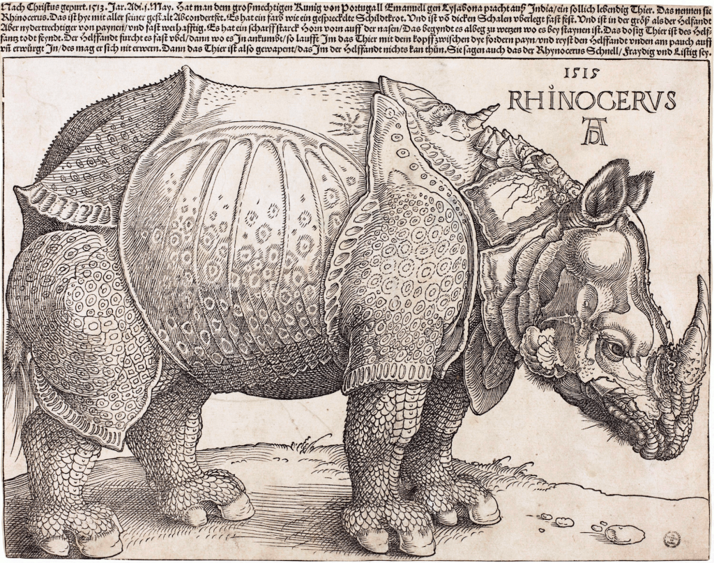 Artist Albrecht Dürer's 1515 engraving of a rhinoceros, full body in profile, looking right, with text above.